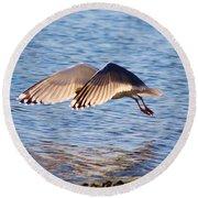Sunlit Gull Wings Round Beach Towel