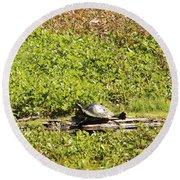 Sunning Turtle In Swamp Round Beach Towel