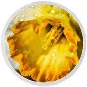 Sunny Daffodil Round Beach Towel