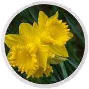 Sunny Daffodils Round Beach Towel