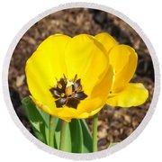 Sunny Yellow Tulips Round Beach Towel