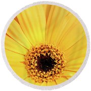 Sunrise Gerbera Round Beach Towel