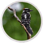 Sunshine Needed - Male Downy Woodpecker Round Beach Towel