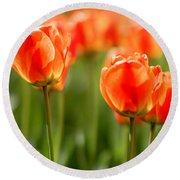 Sunsoaked Tulips #6 Round Beach Towel