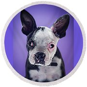 Super Pets Series 1 - Bugsy Close Up Round Beach Towel