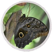Superb Markings On An Owl Butterfly In A Garden Round Beach Towel