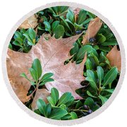 Surrounded Leaf Round Beach Towel