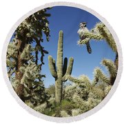 Surrounded Saguaro Cactus Wren Round Beach Towel