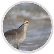Suspicious Willet Round Beach Towel