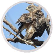 Swainson Hawk Round Beach Towel