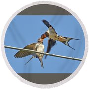 Swallow And Cub Round Beach Towel
