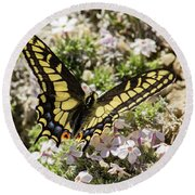 Swallowtail At Sand Wash Round Beach Towel