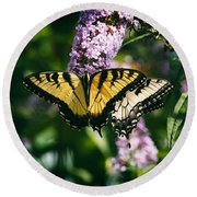 Swallowtail Butterfly At The Maryland Zoo Round Beach Towel
