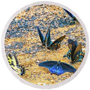 Swallowtail Butterfly Convention Round Beach Towel