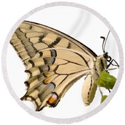 Swallowtail Butterfly Vector Isolated Round Beach Towel