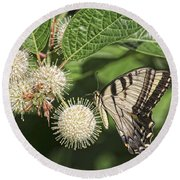 Swallowtail With Flowers Round Beach Towel