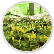Swamp Becon Fungi Round Beach Towel