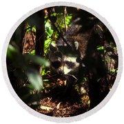 Swamp Raccoon Round Beach Towel