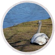 Swan 577 Round Beach Towel
