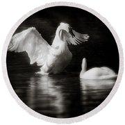 Swan Display Round Beach Towel