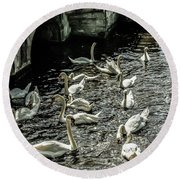 Swans On The Canal Round Beach Towel