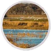 Swans Returning To The Roost At Riverlands 7r2_dsc3855_12202017 Round Beach Towel