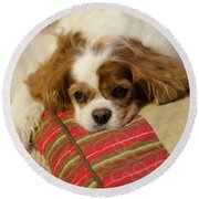 Sweet Dog Face Round Beach Towel