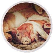 Sweet Dream Piglets Round Beach Towel