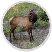 Sweet Elk Calf Round Beach Towel