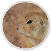 Sweet Face Of A Prairie Dog Up Close And Personal Round Beach Towel