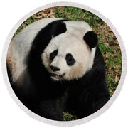 Sweet Faced Chinese Giant Panda Bear Sitting Down Round Beach Towel