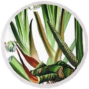 Sweet Flag Or Calamus, Acorus Calamus Round Beach Towel
