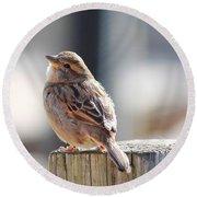 Sweet Sparrow Round Beach Towel