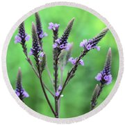 Sweet Vervain Round Beach Towel