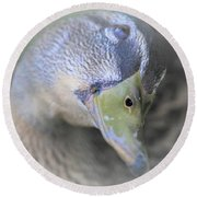 Sweetest Mallard Expression Round Beach Towel