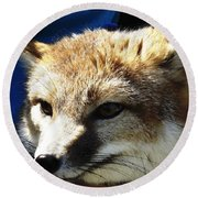 Swift Fox With Oil Painting Effect Round Beach Towel