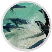 Swim Race - African Penquins Round Beach Towel