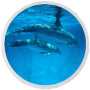 Swimming Dolphins Round Beach Towel