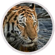 Swimming Tiger Round Beach Towel