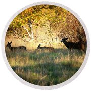 Sycamore Grove Series 10 Round Beach Towel