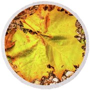 Sycamore Leaf  In Fall Round Beach Towel