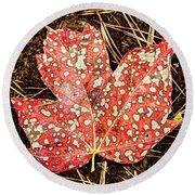 sycamore maple Autumn leaf Round Beach Towel