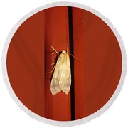 Sycamore Tussock Moth Round Beach Towel
