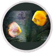 Symphysodon Discus Fishes Round Beach Towel