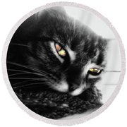 Tabby Cat Selective Color Round Beach Towel