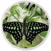 Tailed Jay Butterfly #2 Round Beach Towel