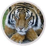 Takin A Break Tiger Round Beach Towel