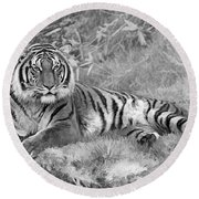 Takin It Easy Tiger Black And White Round Beach Towel