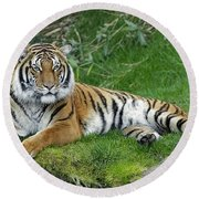 Takin It Easy Tiger Round Beach Towel
