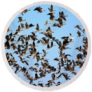 Taking Flight 2 Round Beach Towel